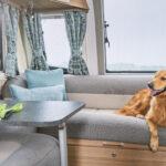 Pegasus Grande SE - Dog in Lounge
